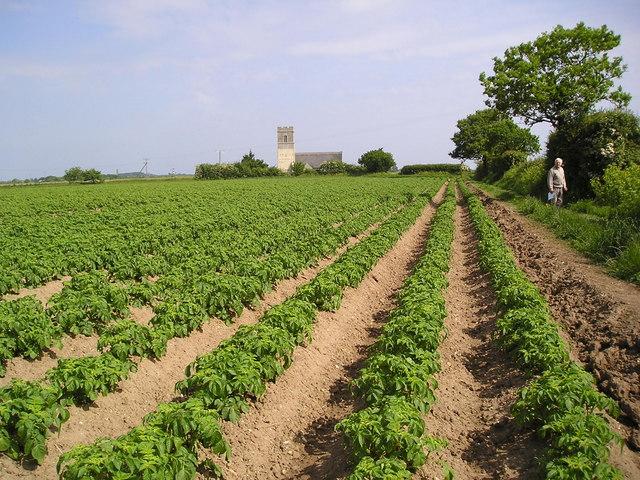 File Norfolk Potato Field Geograph Org Uk 180521 Jpg