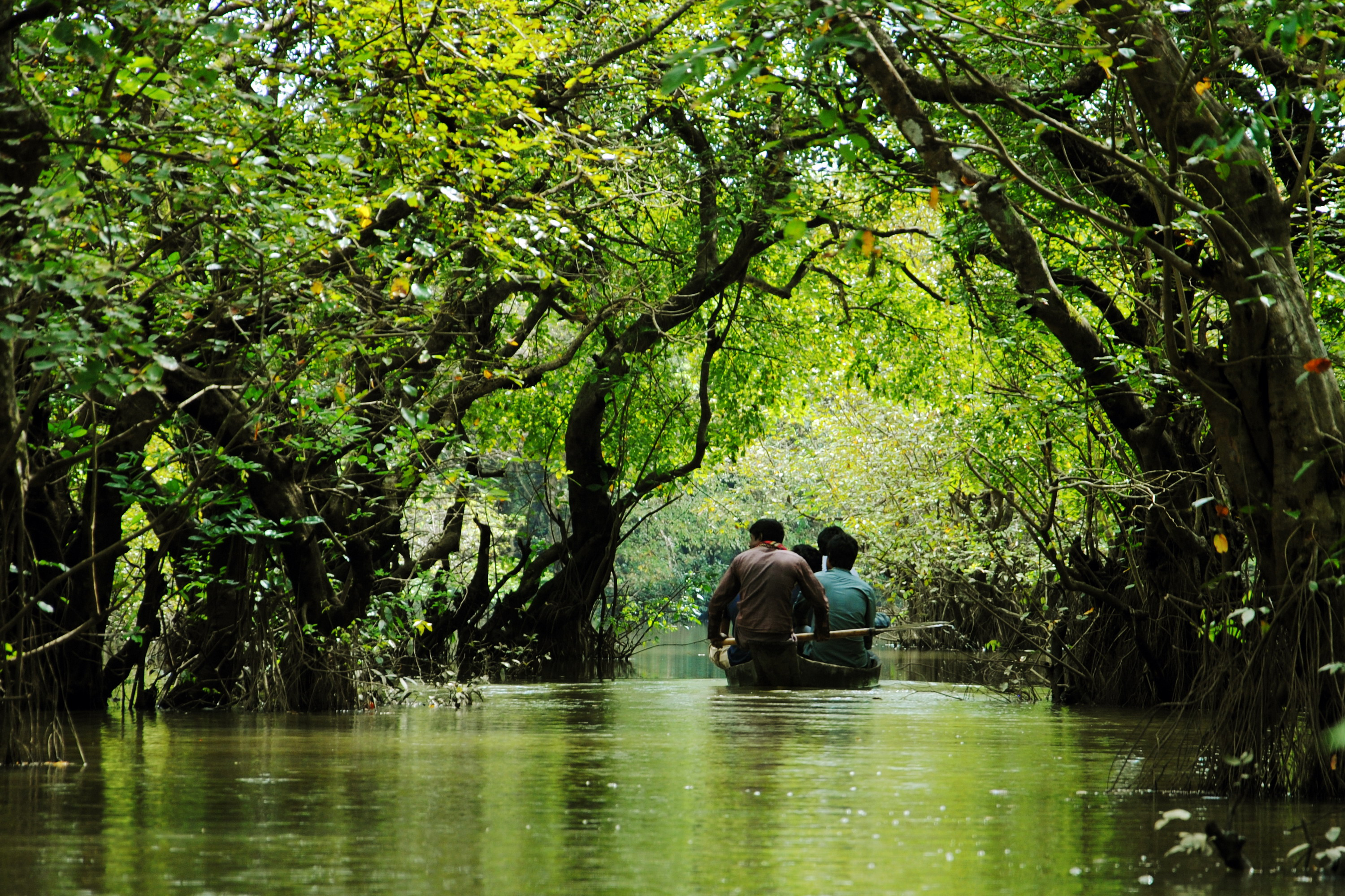 Ratargul Swamp forest in Bangladesh