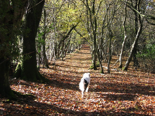 Rhymney Valley Ridgeway Footpath - geograph.org.uk - 74371