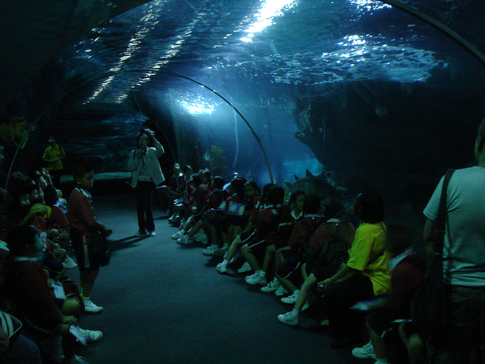 Description Siam Ocean World.jpg