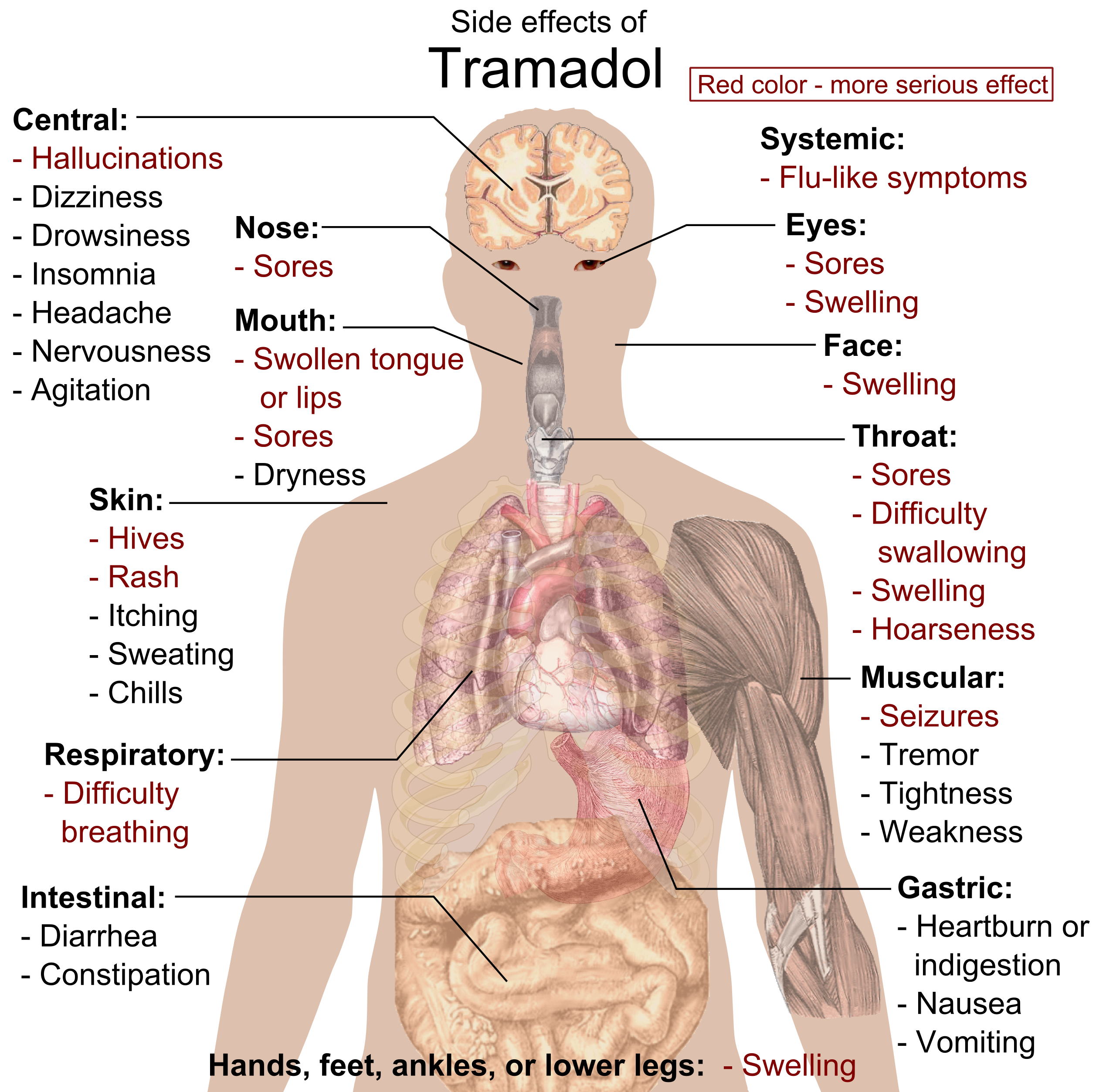 File:Side effects of Tramadol.png - Wikimedia Commons