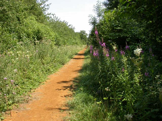The Woodpecker Trail, Salcey Forest - geograph.org.uk - 200855