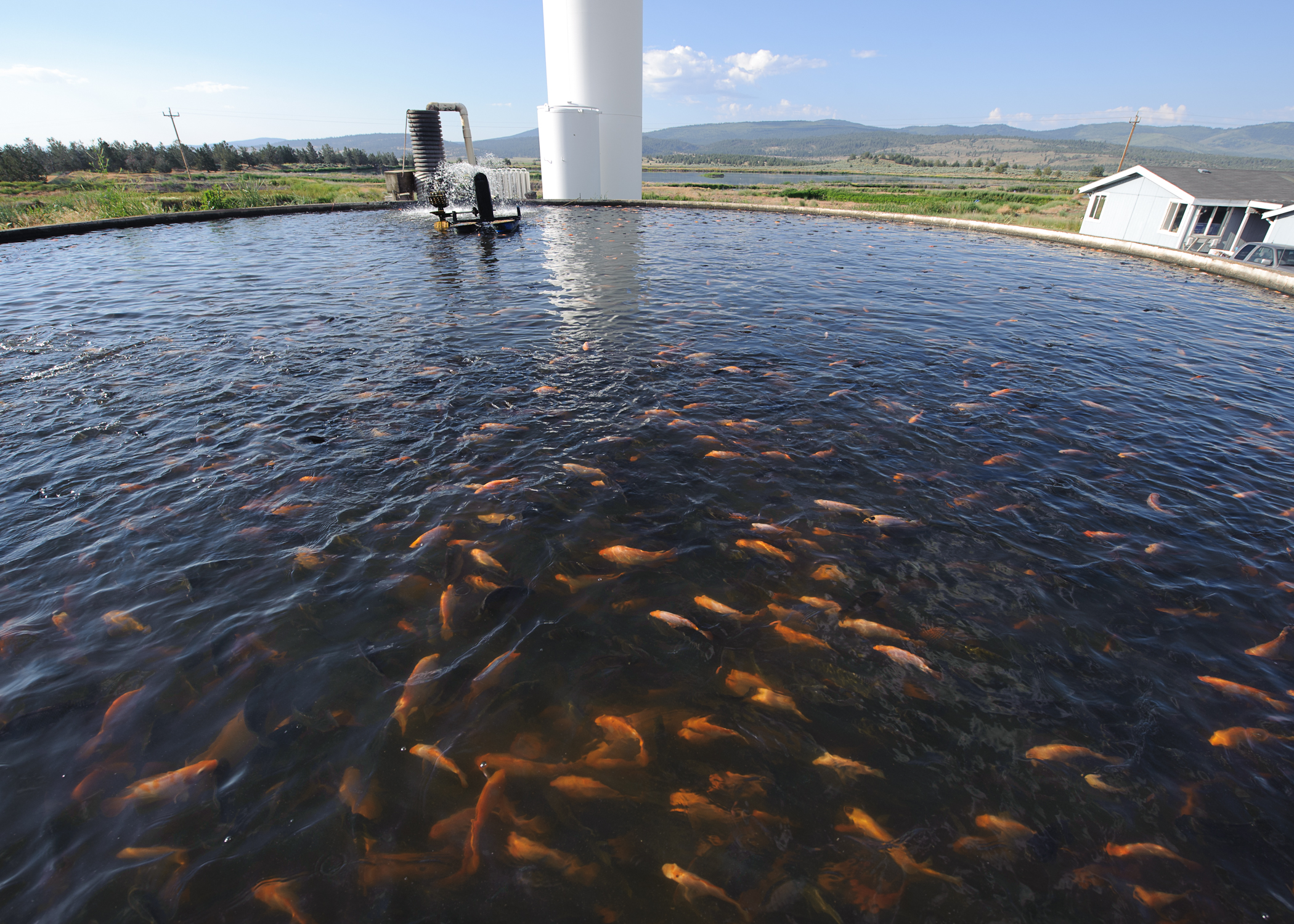 File tilapia farm for Wisconsin fish farms