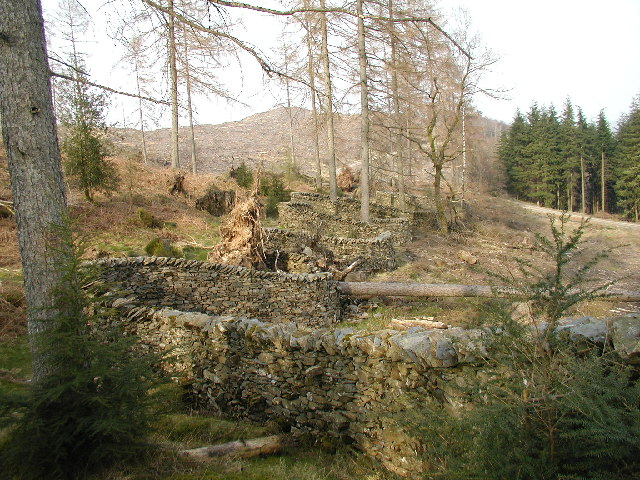 """Taking a Wall for a Walk"" - Grizedale Forest - geograph.org.uk - 36895"