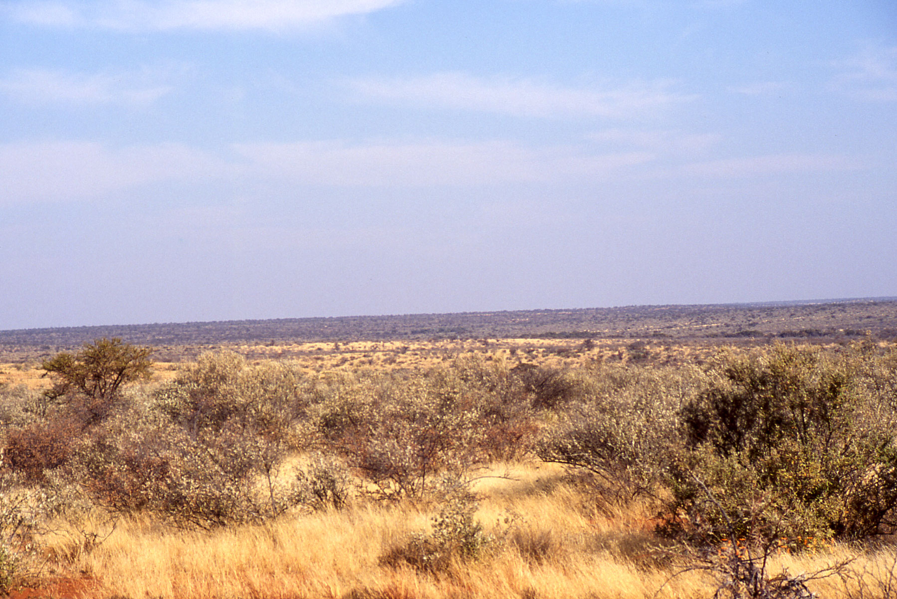 Description African.landscape.jpg