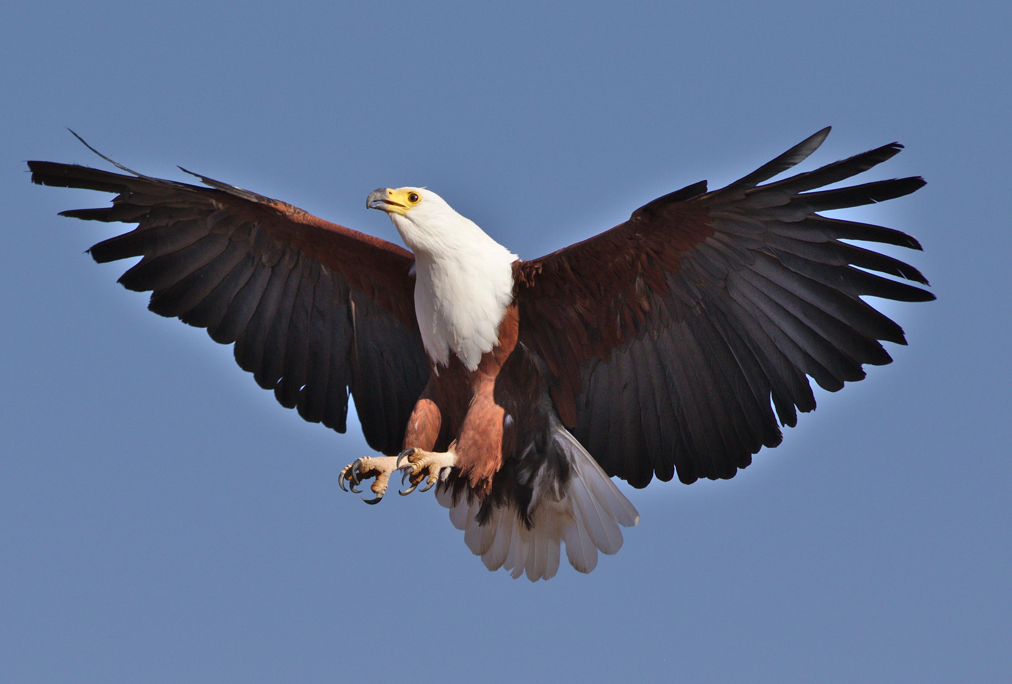 birds list of africa