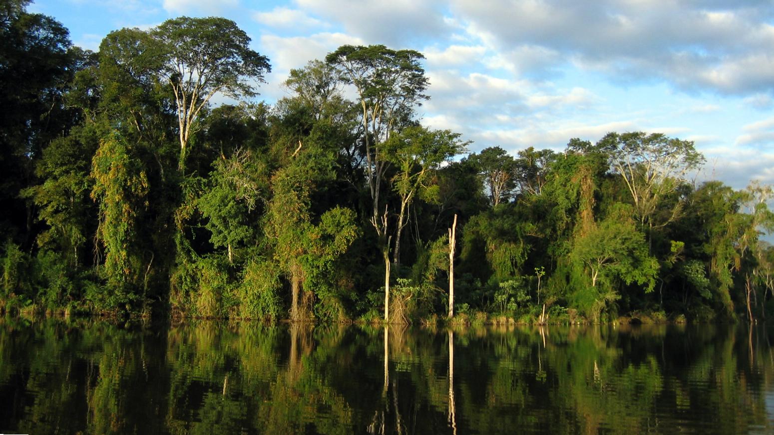Boden Regenwald