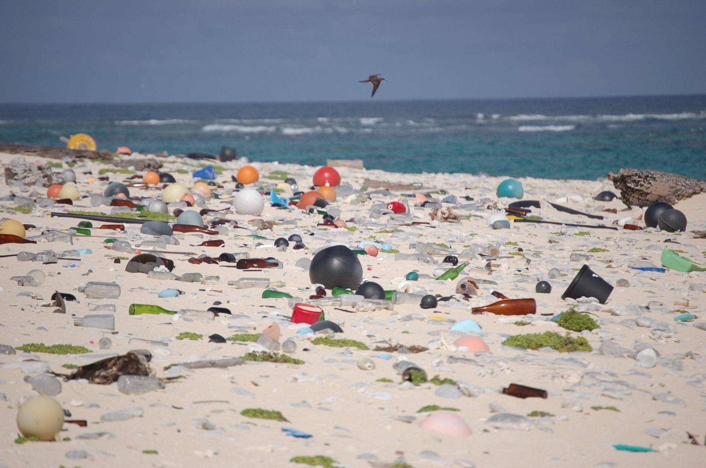 Image result for plastic in ocean