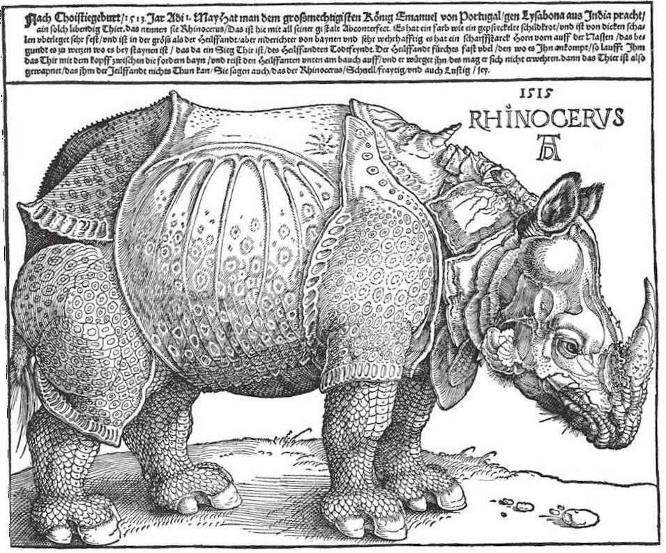 Rhinoceros. Skizze von Albrecht Dürer, 1515.