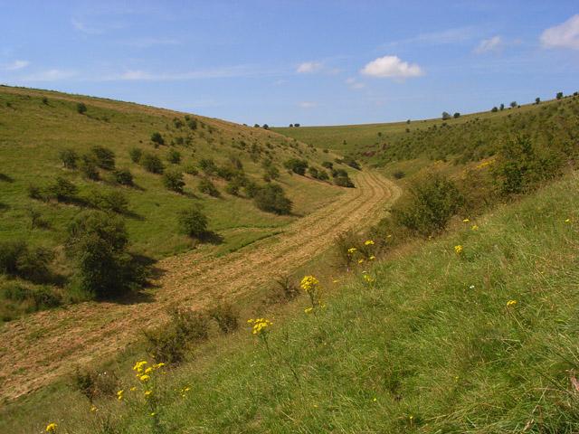 Downland, Maiden Bradley - geograph.org.uk - 909703