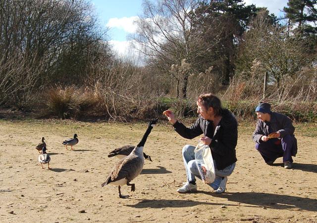 Feeding the geese at Ravensthorpe reservoir - geograph.org.uk - 1671825