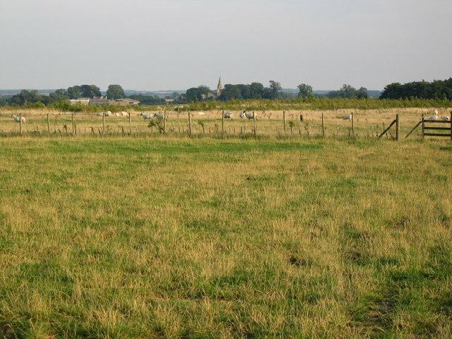Fields near Buckminster - geograph.org.uk - 38260