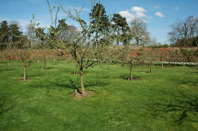 Fruit trees at Berrington Hall - geograph.org.uk - 1263929