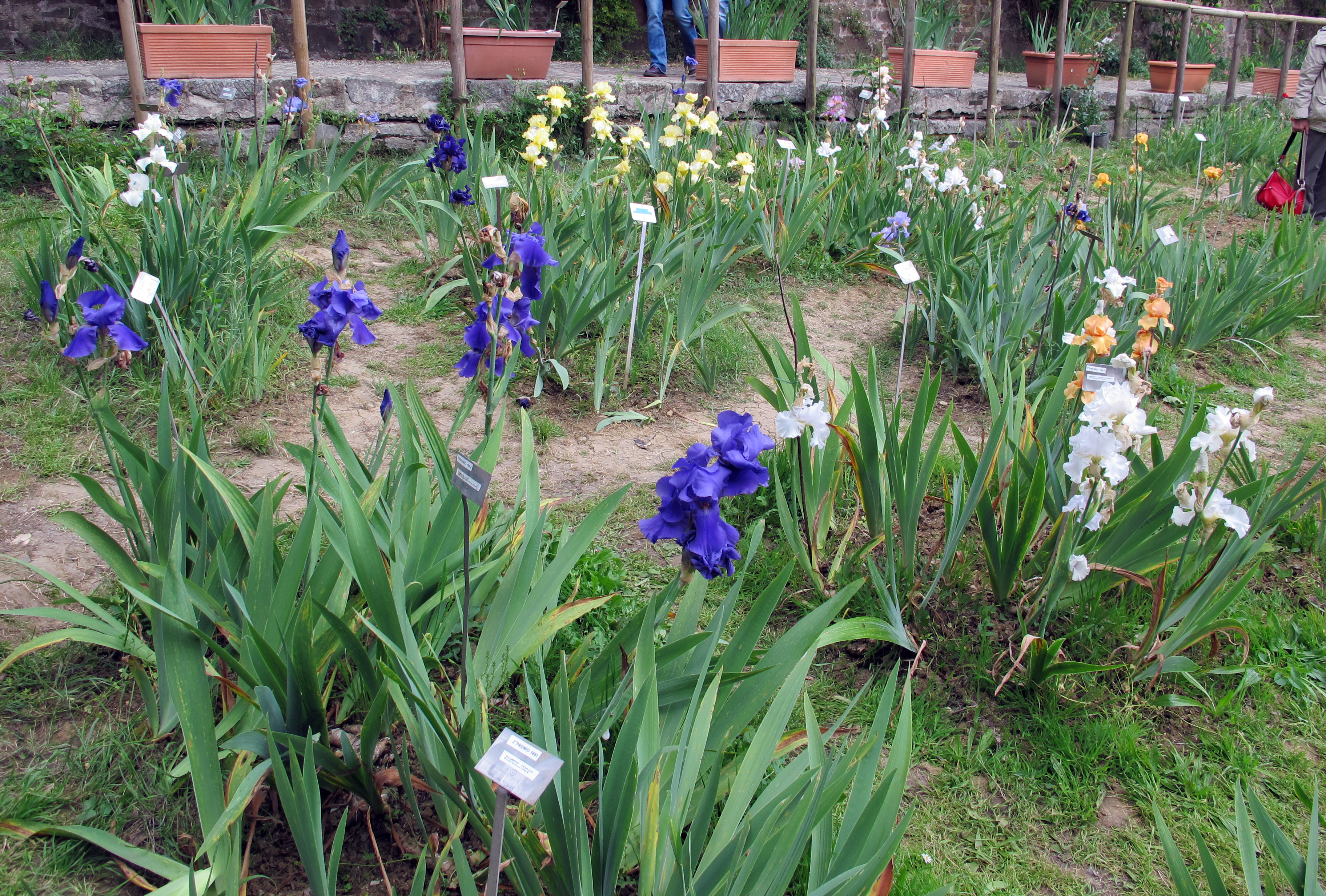 File giardino dell 39 iris firenze 2014 02 jpg wikimedia - Giardino dell iris firenze ...