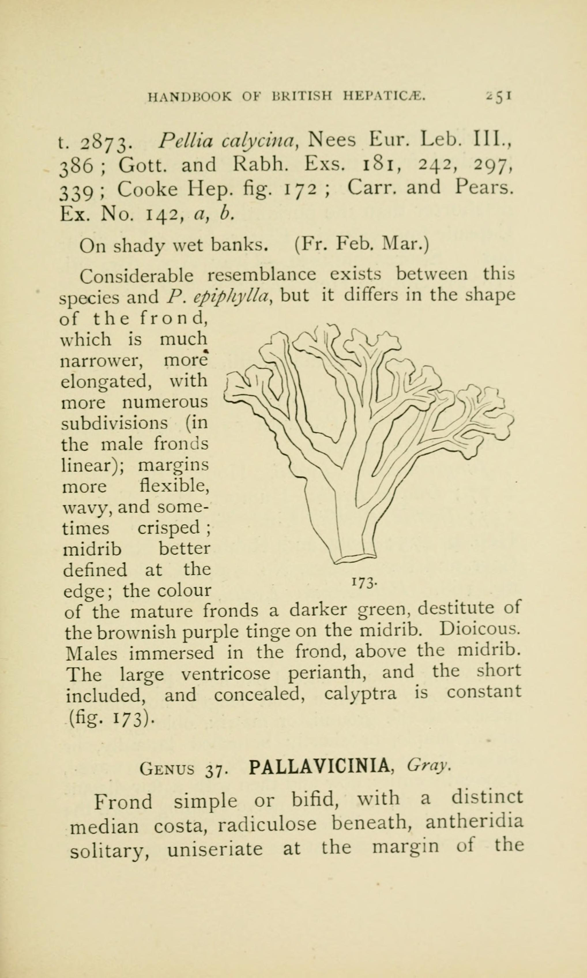 FileHandbook Of British Hepatic Containing Descriptions And Figures The Indigenous Species Marchantia Jungermannia Riccia Anthoceros Page