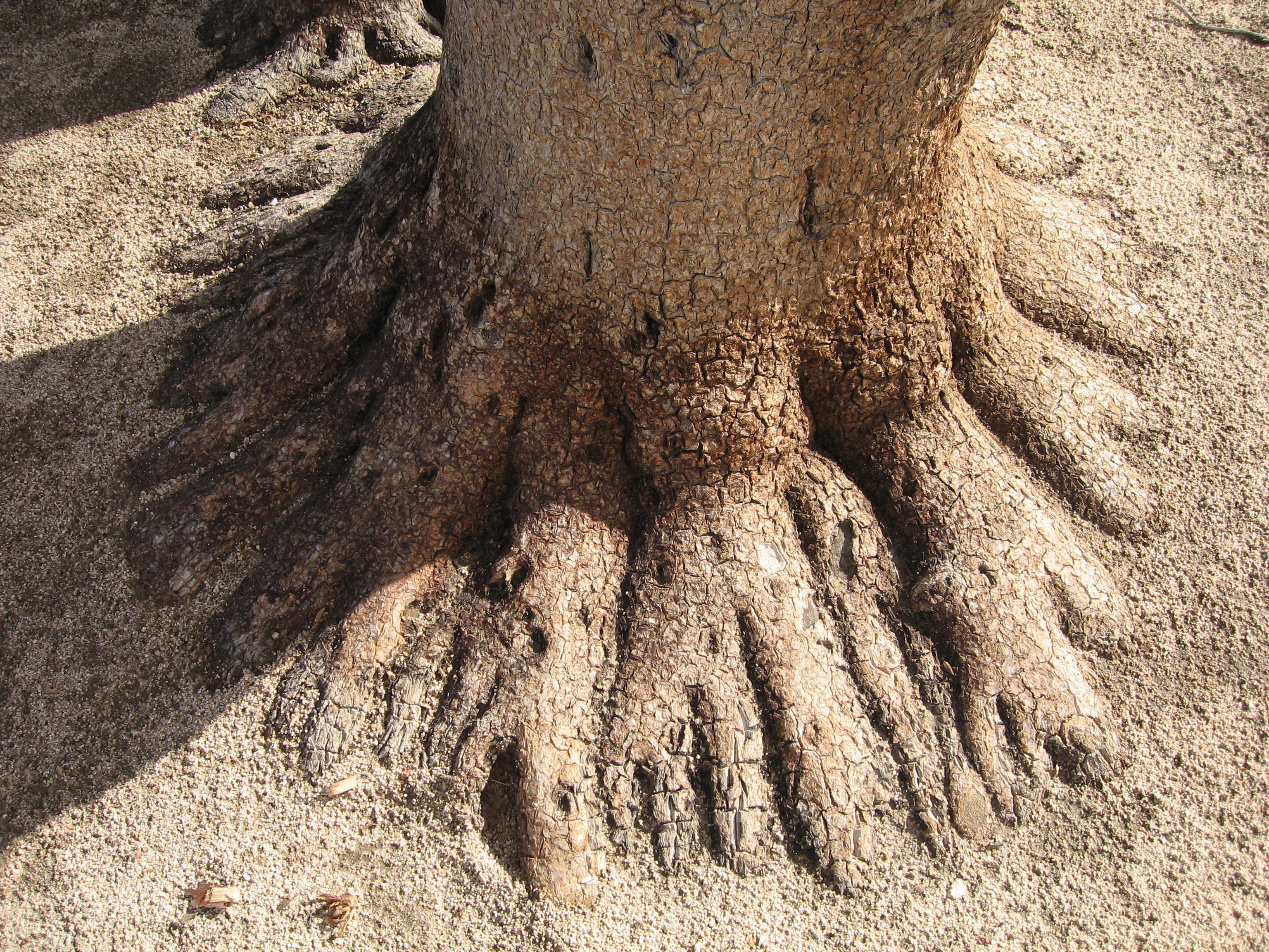 Which Size Tree Rings Indicate Good Growing Conditions