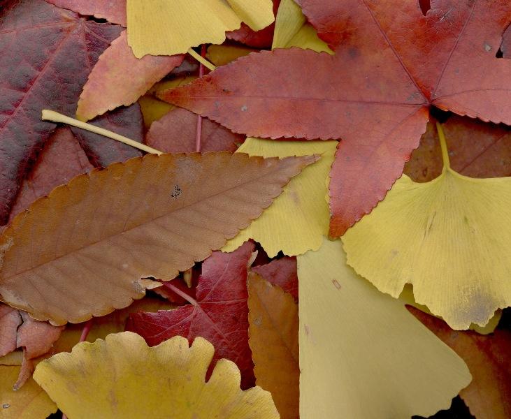 Leaves-600