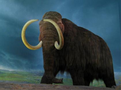 Depiction of Mammuthus primigenius