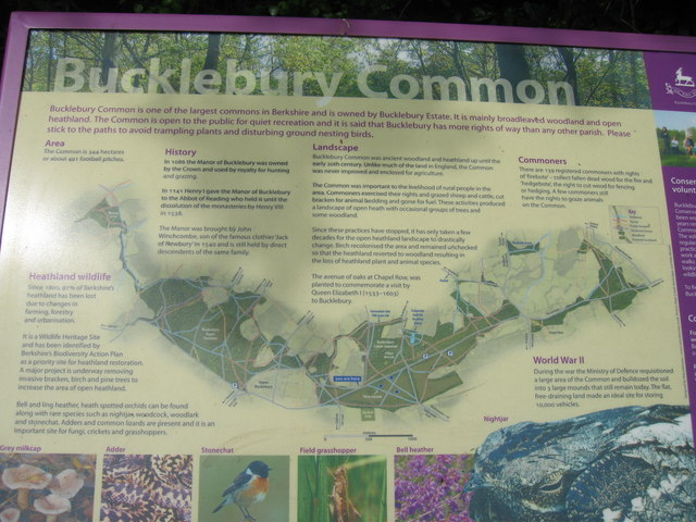 Map of Bucklebury Common - geograph.org.uk - 791630