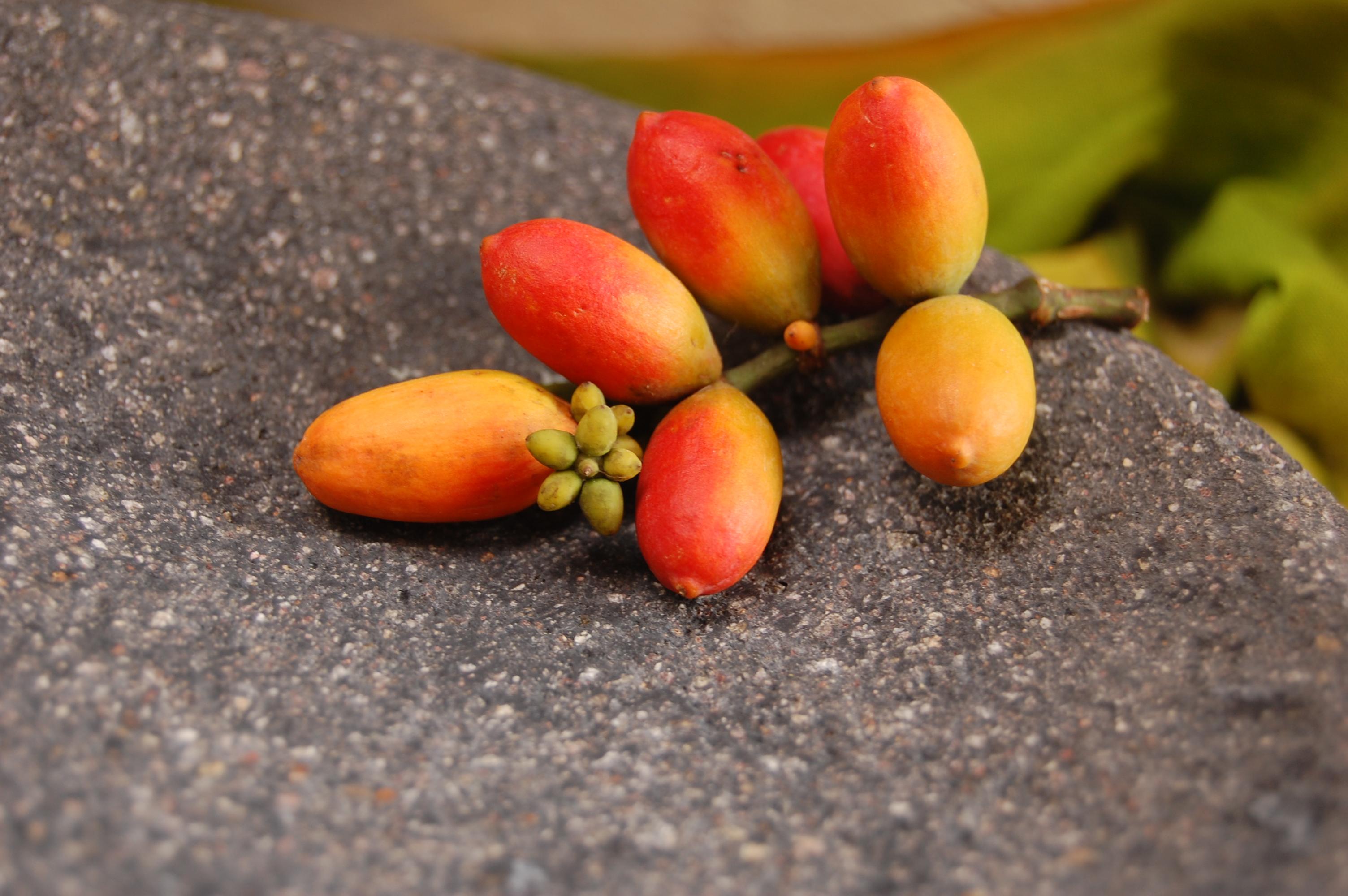 Macam - macam hasil olahan dari buah dan Daun Melinjo