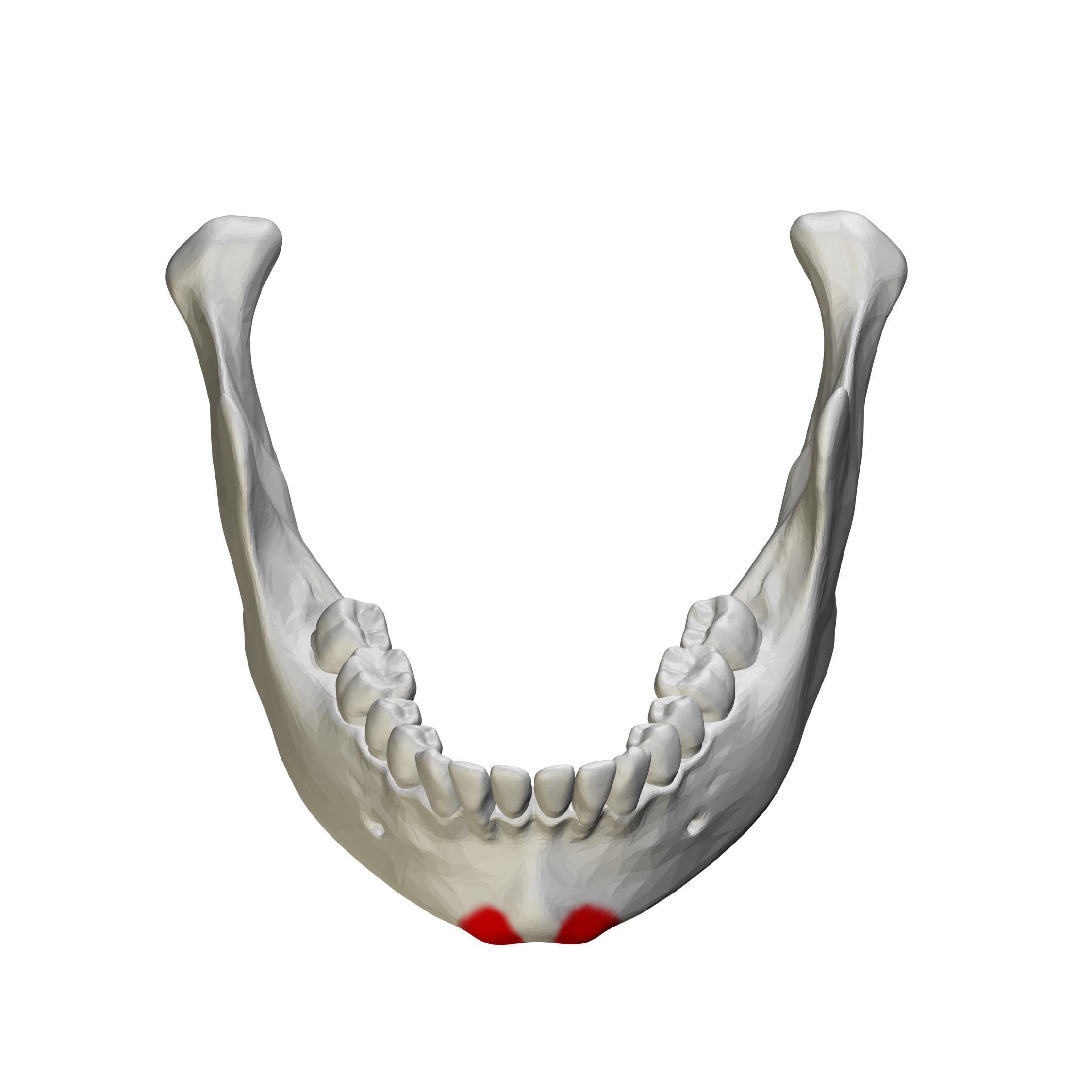 File:Mental tubercle - close up - anterior view02.png ...