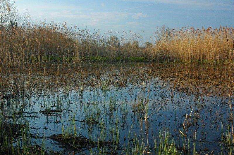 File:Morava wetlands.jpg