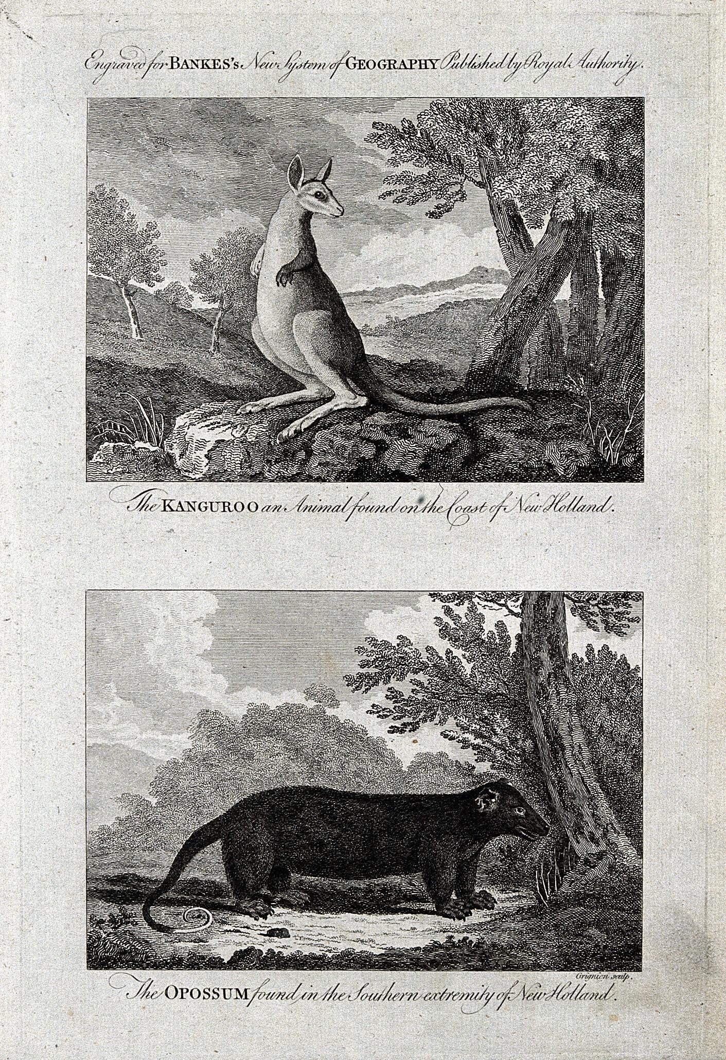 https commons wikimedia org wiki file new holland above a kangaroo below an opossum etching b wellcome v0022835el jpg