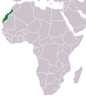 The average adult weight of a Saharan shrew is 6 grams (0.01 lbs)