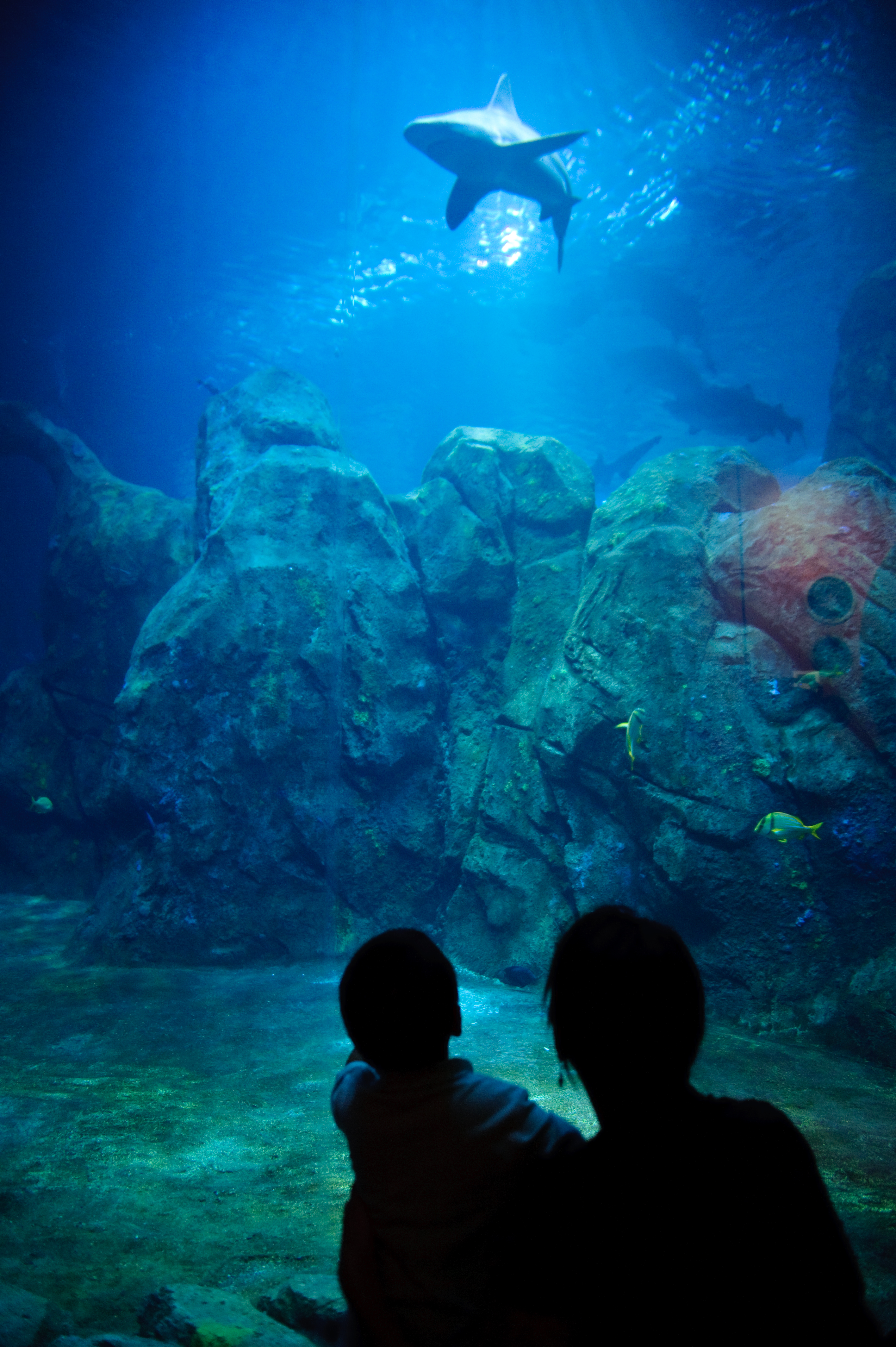 Adventure aquarium in new jersey a must see news for The camden