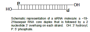 Image:SiRNA structure2.jpg