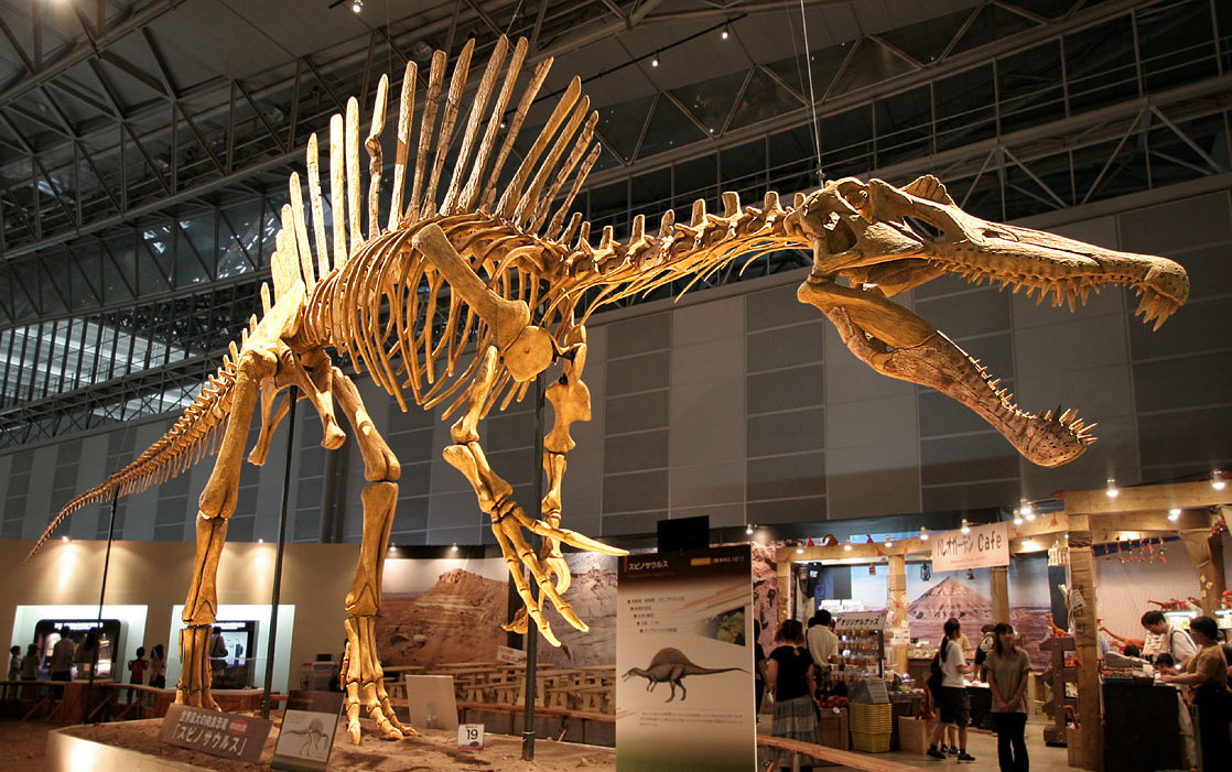 Spinosaurus_skeleton.jpg