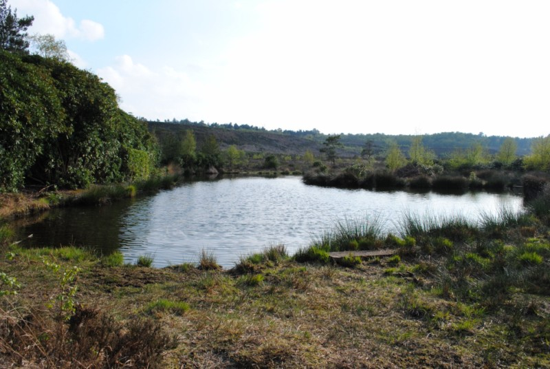 The Pond in The Bog. - geograph.org.uk - 1828271