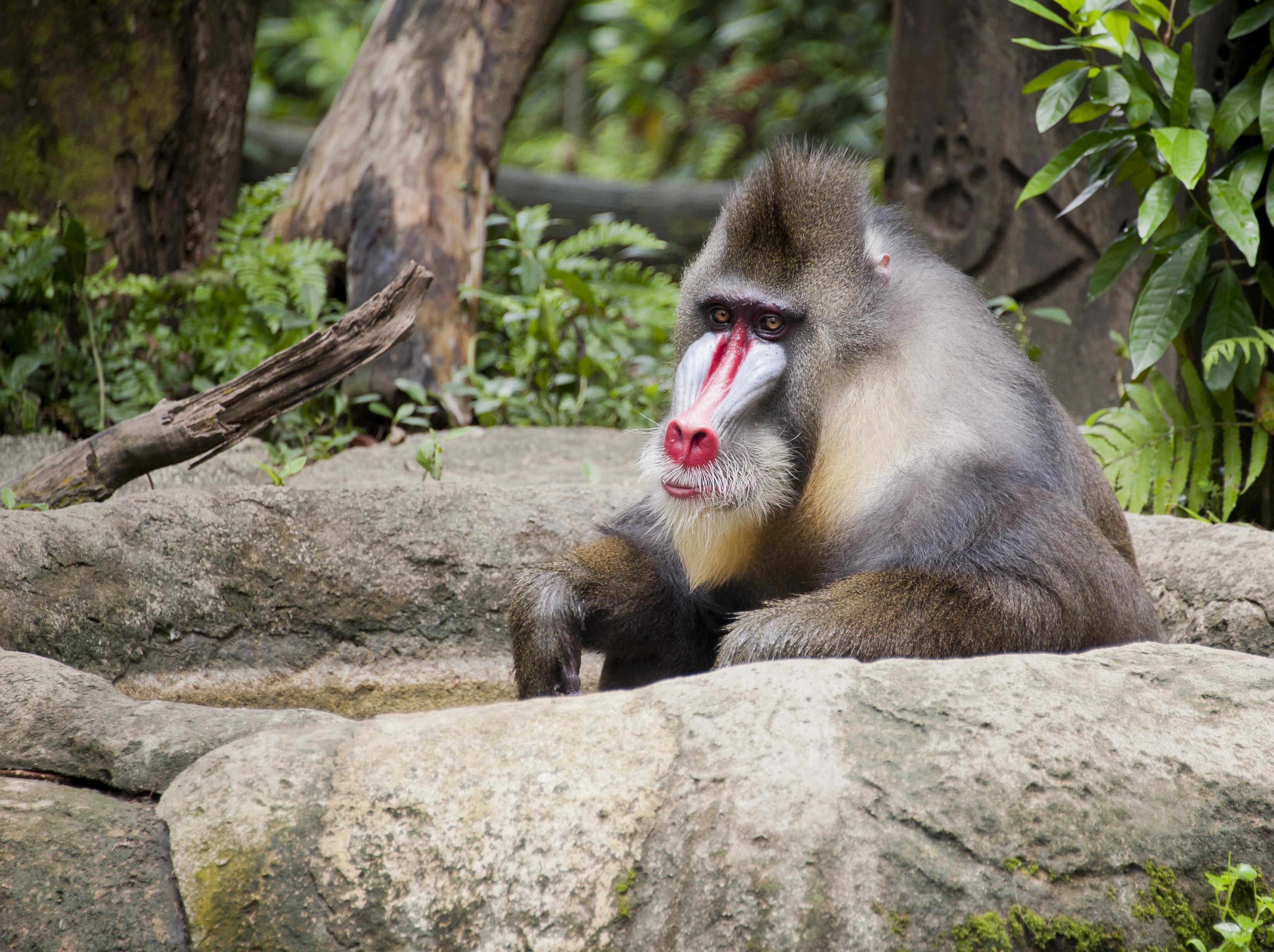 Singapore Zoo: Hours, Address, Singapore Zoo Reviews: 5/5