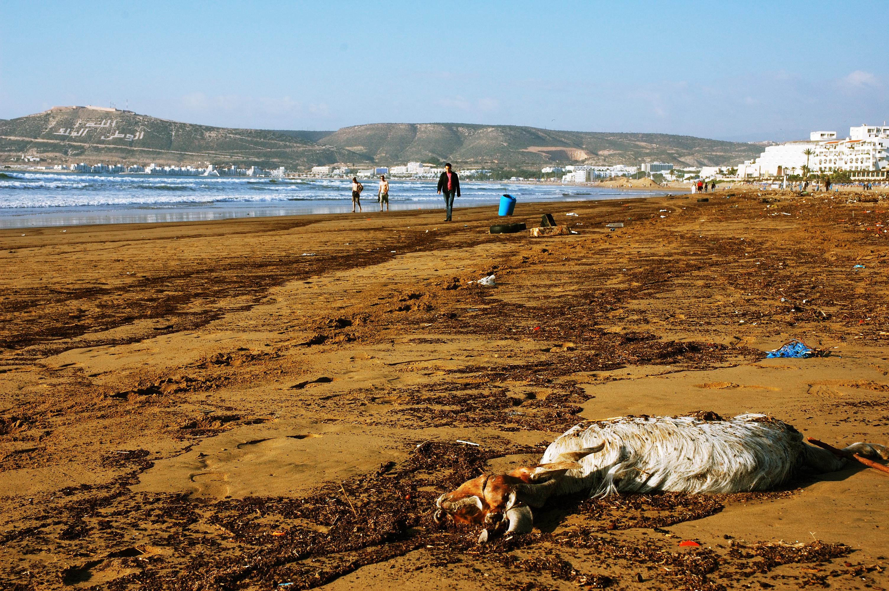 Image Result For Agadir Beach Club