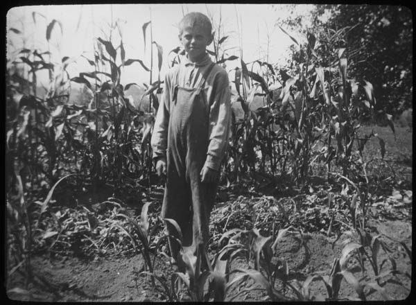 File:Boy in corn field, Woodbine, New Jersey (4254191488).jpg