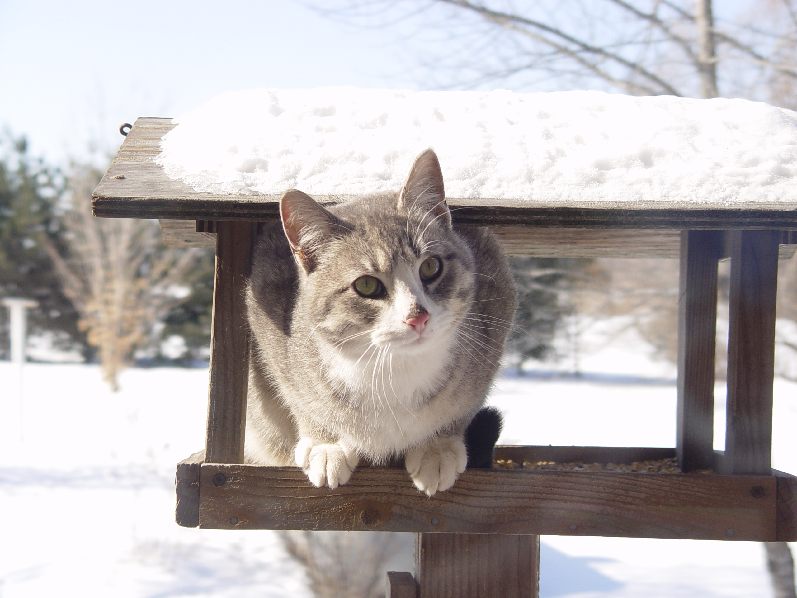 Protecting Cats in Winter