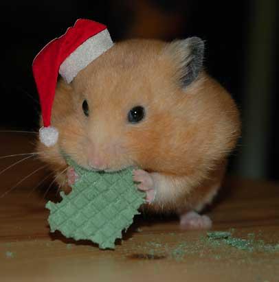www hamster de