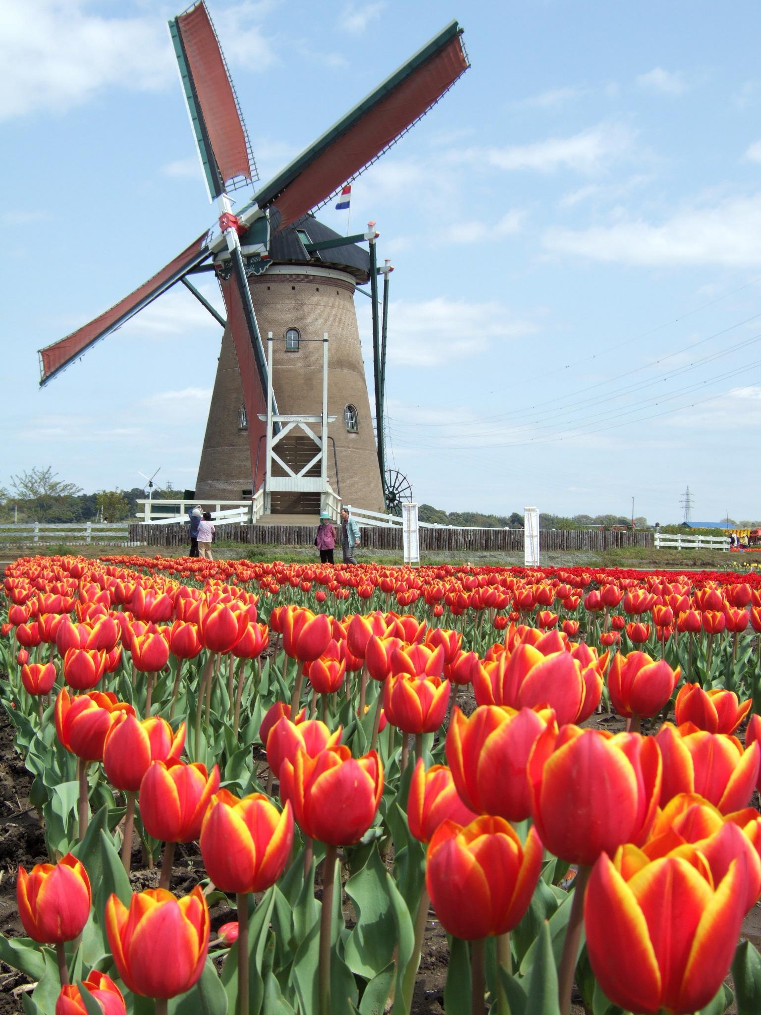 Denmark - Greenest for Energy De_Liefde_Windmill,_Sakura,_Chiba,_Japan_-_20060417