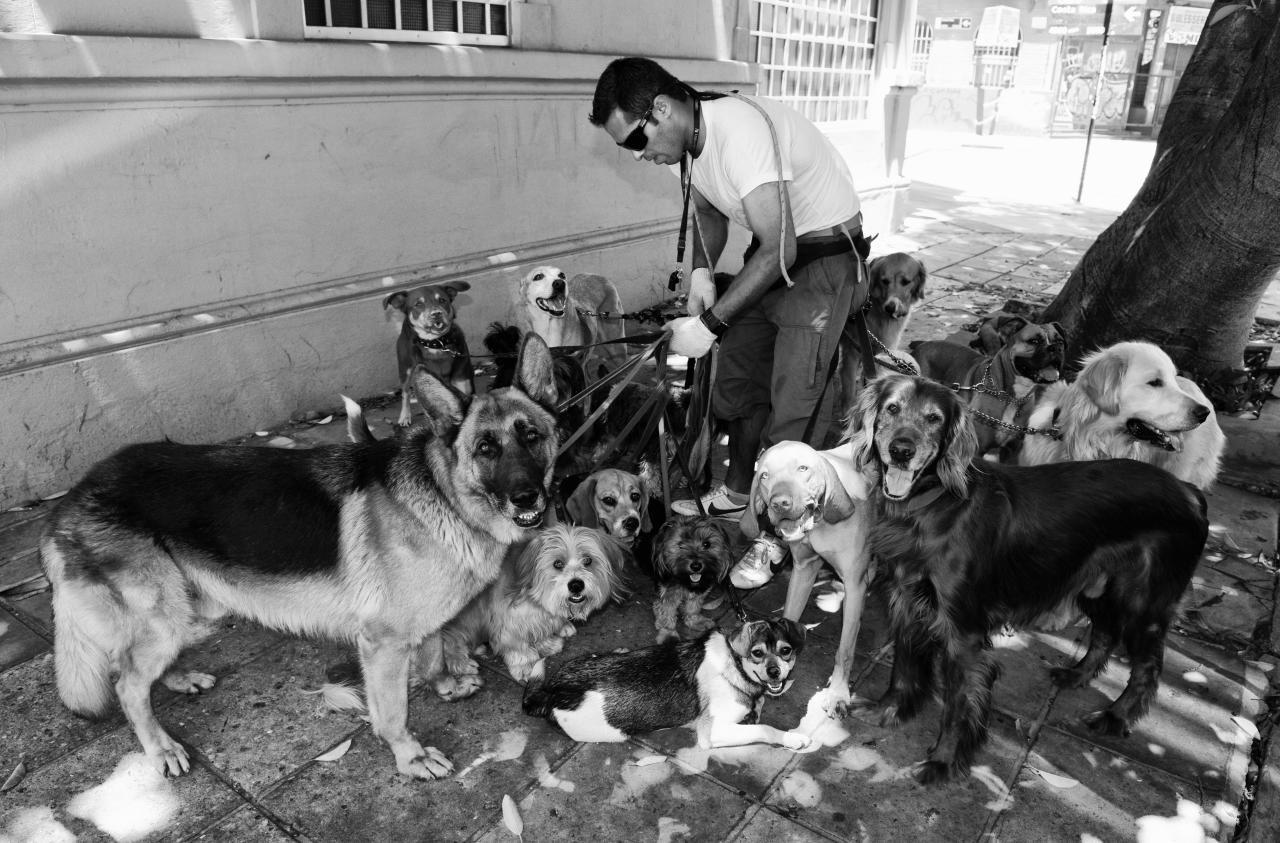Dog Walker In King Of Queens