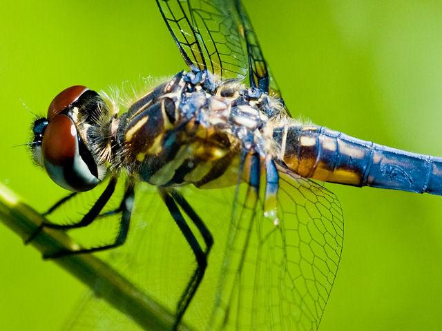 Dragonfly_(2413057204).jpg