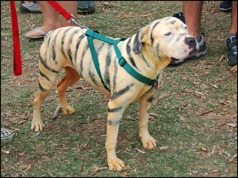 FileEeyoreu0027s Birthday Party 2009 Tigger Dog.jpg & File:Eeyoreu0027s Birthday Party 2009 Tigger Dog.jpg - Wikimedia Commons