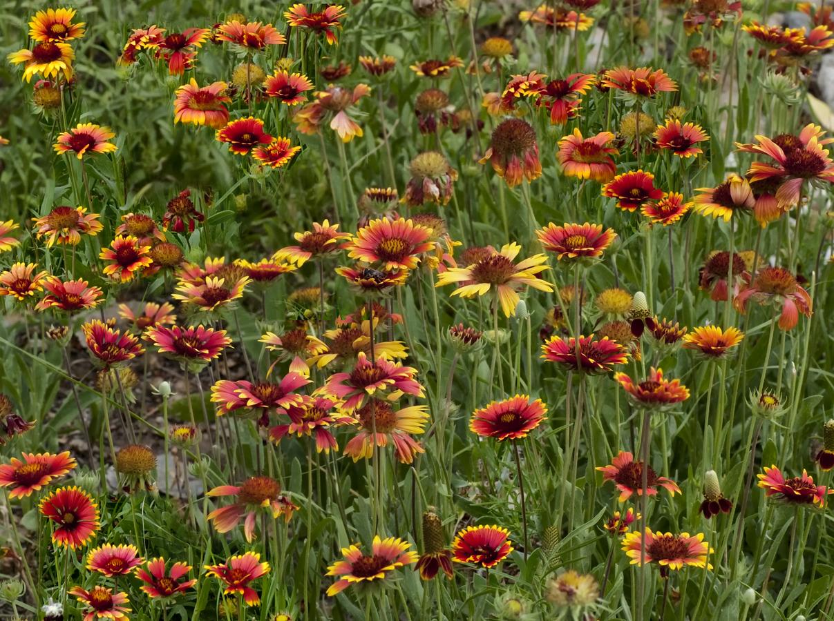 File Flower patch Wikimedia mons