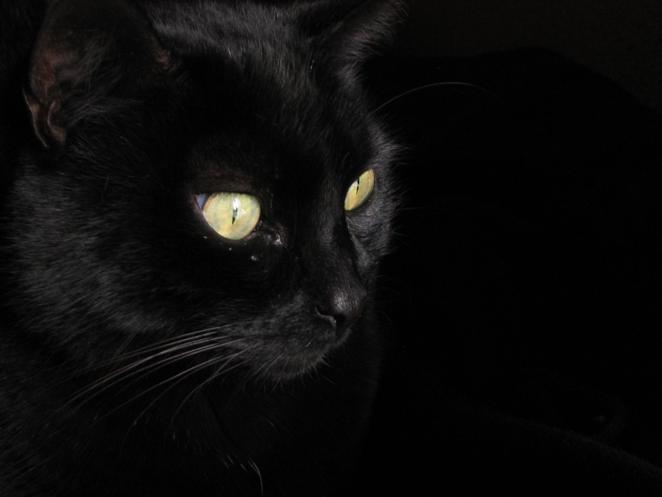 Cat E Eyes En Vrai
