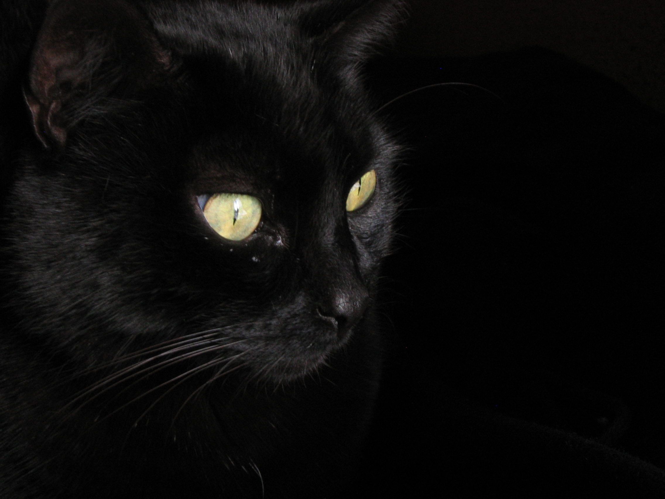 Картинки с черными кошками на аву, картинки про