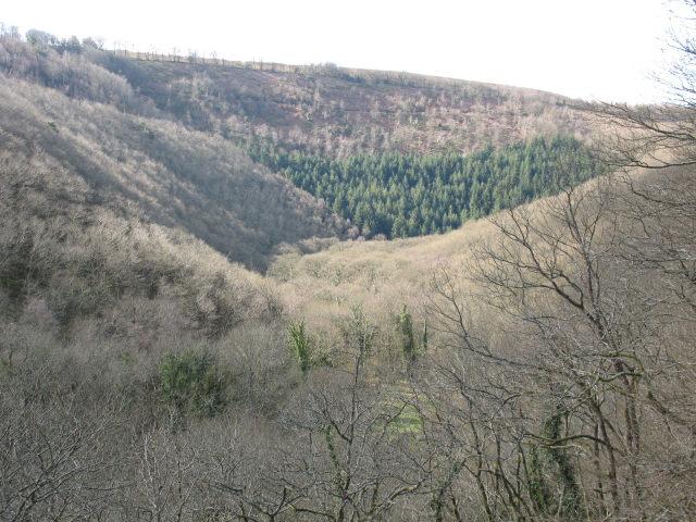 Hannicombe Wood - geograph.org.uk - 742550