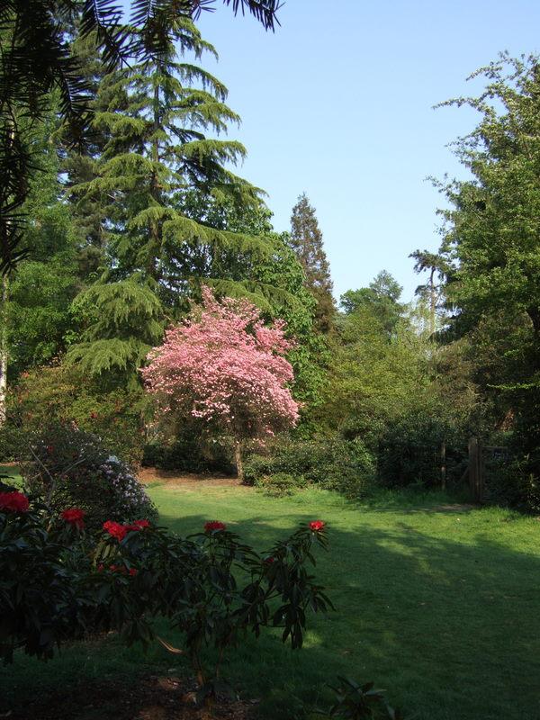Harcourt Arboretum_1