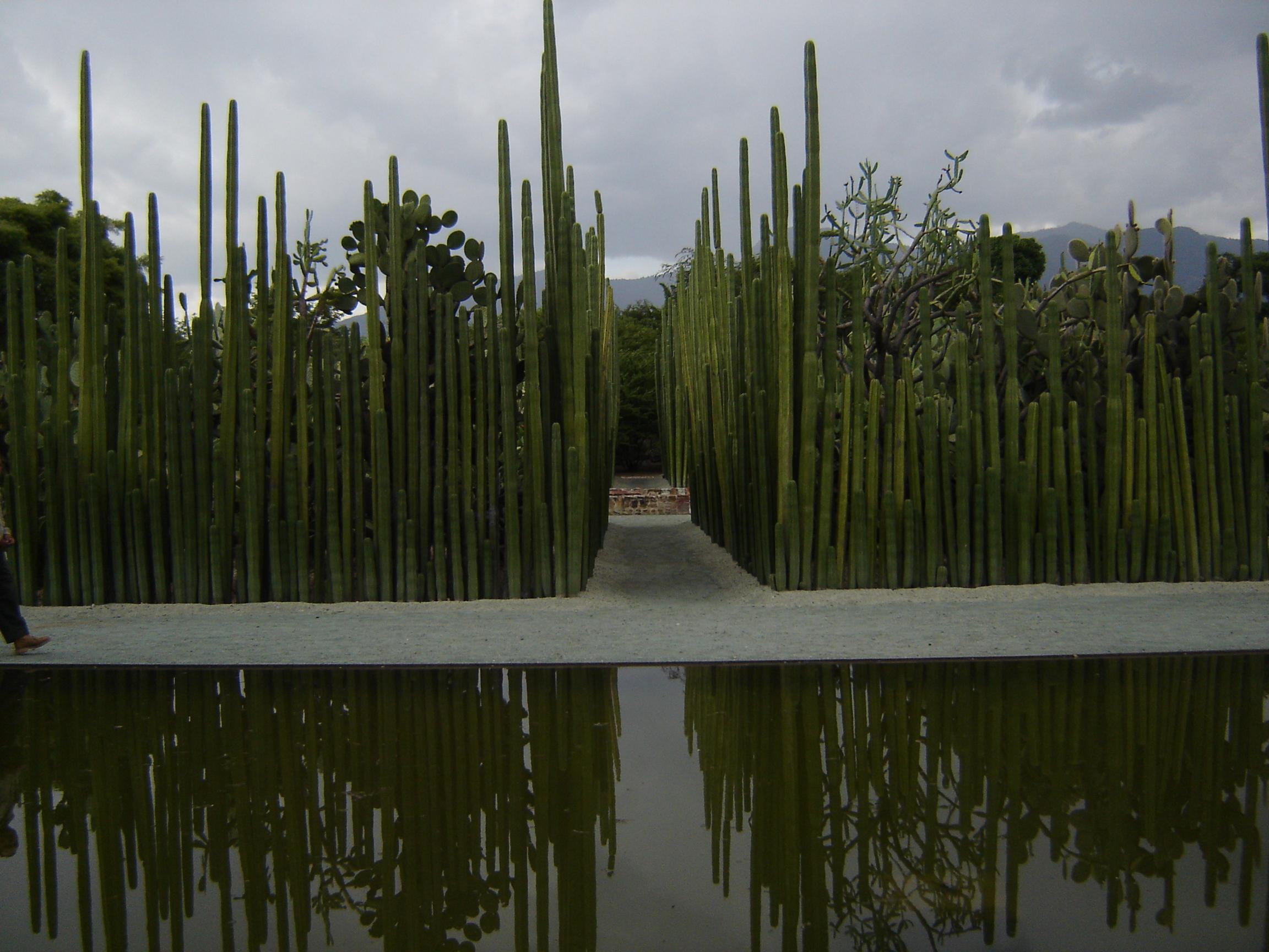 File jard n etnobot nico de oaxaca wikimedia commons for Jardin oaxaca
