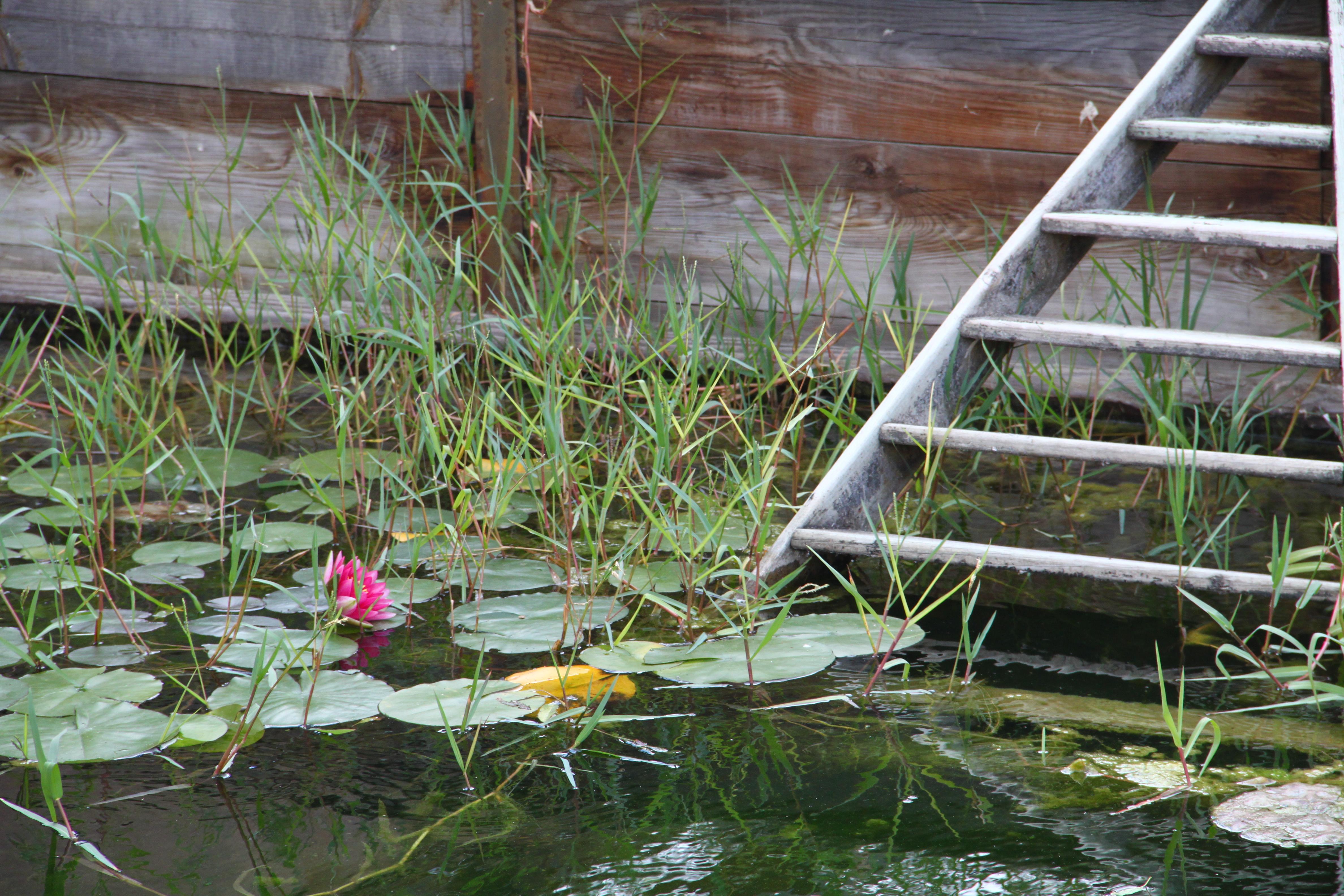 Fichier jardins du mus um toulouse plan d 39 eau jpg wikip dia - Les jardins du museum toulouse ...