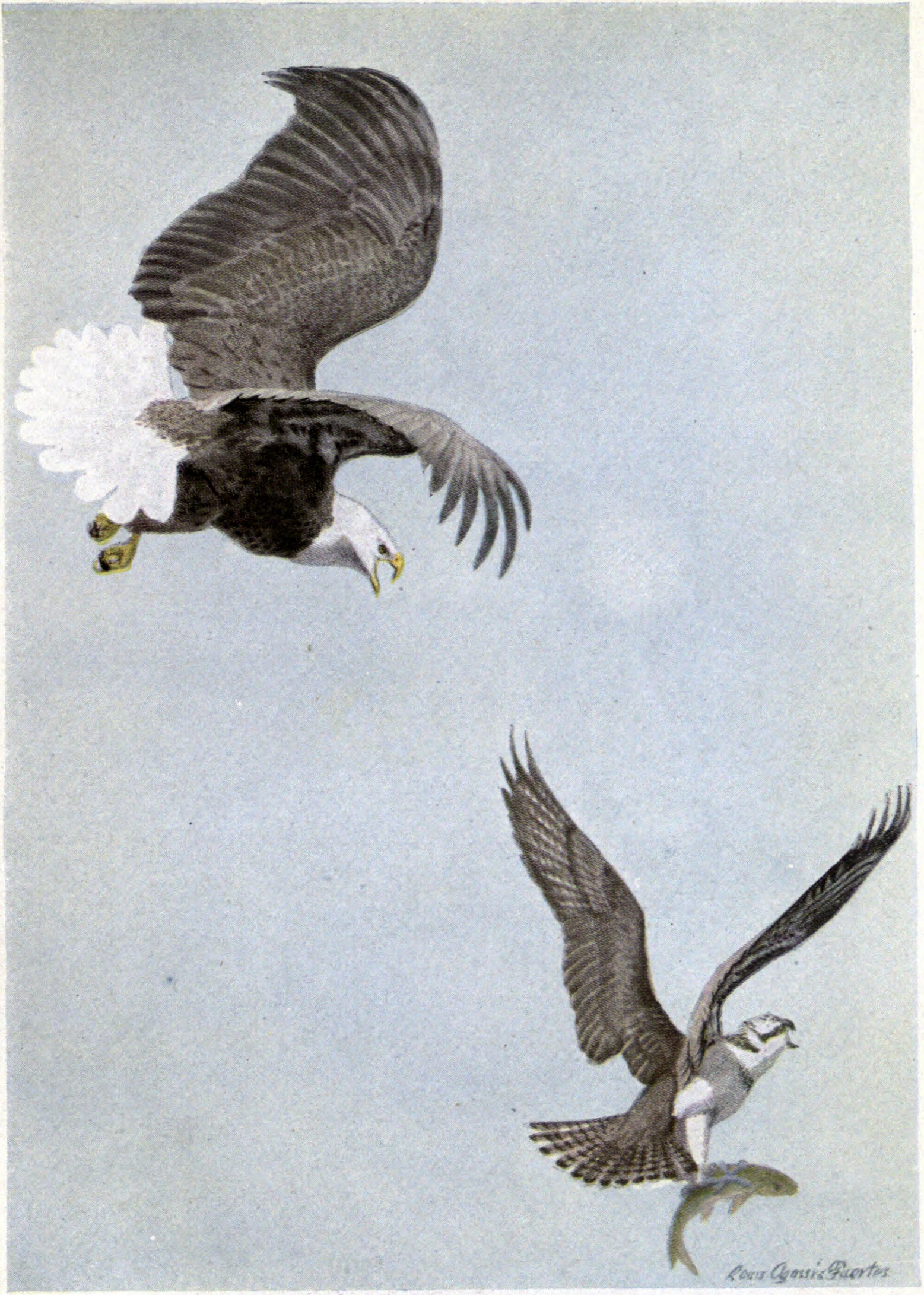 File:King Eagle, Plunger the Osprey.jpg - Wikimedia Commons