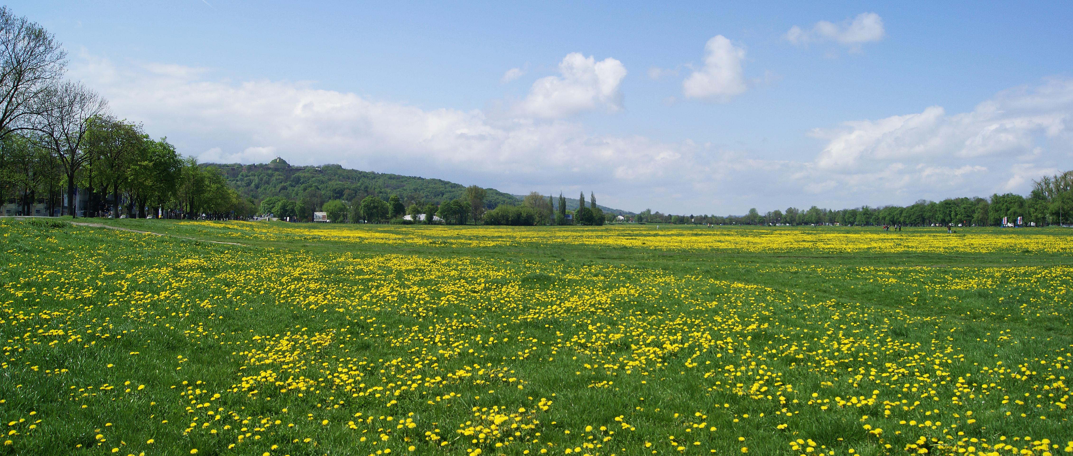 File krakow blonia meadow view to w krakow for The meado